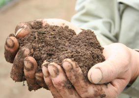 有機無農薬人参ができる土
